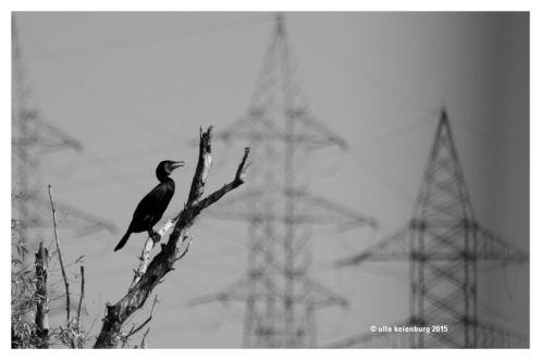 kormoran vor energie