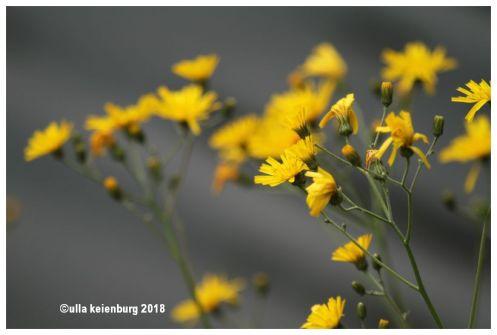 maine flowers 18